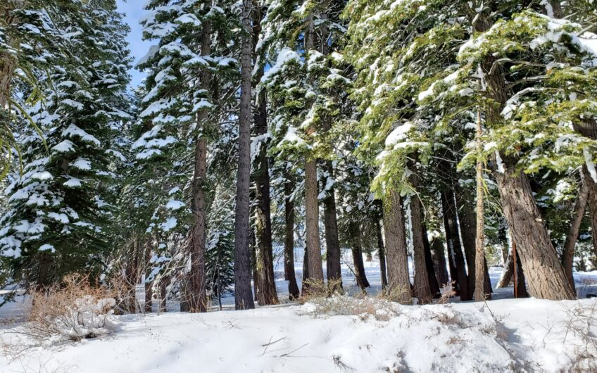 Possible Views from this Bear Valley Parcel