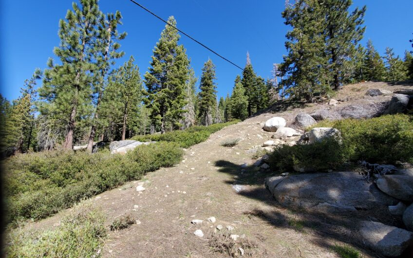 Borders National Forest