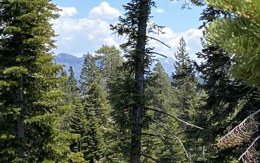 Rocky Top Mountain High
